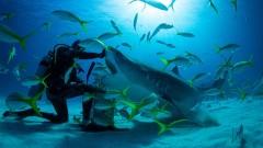 Защо е важно да опазим акулите