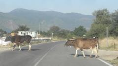 Жители на кюстендилски села вървят над 5 км до автобусна спирка