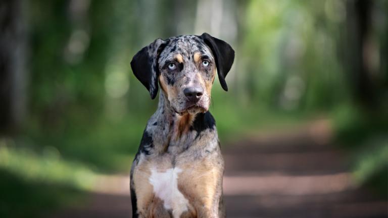 Бургаско семейство пита може ли да ходи в парка с кучето си?