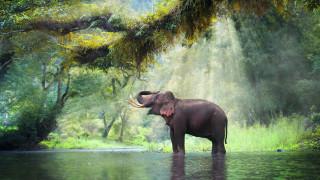 ТОП 10 животни, които са използвани по време на война (ВИДЕО)