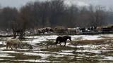 Прокуратурата разследва случай с измрели коне