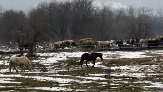 БАБХ проверява как бедстващите коне са стигнали до Бек Бунар
