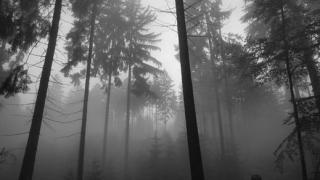 Цигани пребиха с колове горски в Сливен