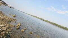 Критично ниски нива на Дунав, има заседнали кораби
