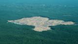 500 000 кв. км гори унищожени за десетилетие от големите хранителни компании