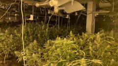 Откриха високотехнологична оранжерия за марихуана в гр. Бяла