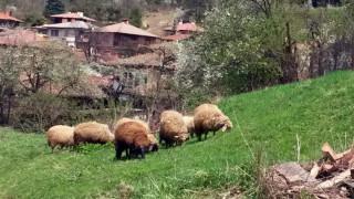 Закриват златоградските села Мързян и Фабрика