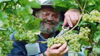 475 000 евро за винопроизводството в Македония отпуска  ЕС