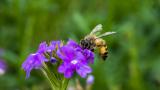 Неоникотиноидните пестициди не вредят само на пчелите