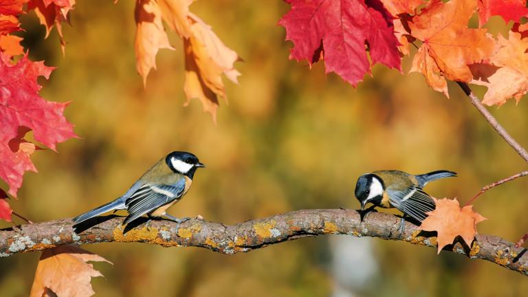 Докато климатът се затопля, птиците се смаляват, а размахът на
