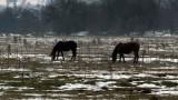 Лошото време пречи на БАБХ да провери конете в Осогово