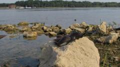 В Приморско скочиха срещу проект за мидена плантация