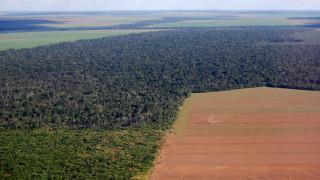 12-годишен връх на обезлесяването в Амазонка