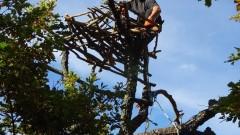 Измайсториха още 2 гнезда за черните лешояди в Родопите