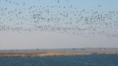 Забраниха достъпа и риболова в Дуранкулашкото и Шабленското езеро