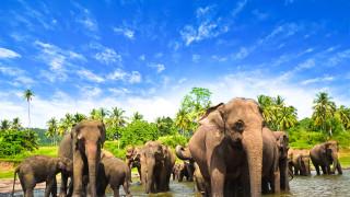 Тъмната страна на туризма сред дивата природа
