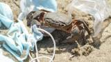 От макаци до раци, дивата природа е изправена пред заплаха от маски