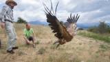 На свобода са пуснати 15 лешояди в Сливен