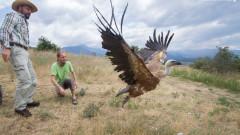 Поставиха сателитни предаватели на 30 лешояди в Източните Родопи