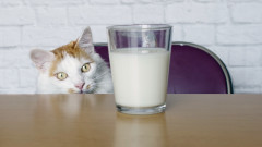 3 неочаквани истини за котките