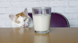Фалира един от най-големите производители на млечни продукти в САЩ