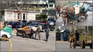 Патриотите искат забрана на каруците и количките в София