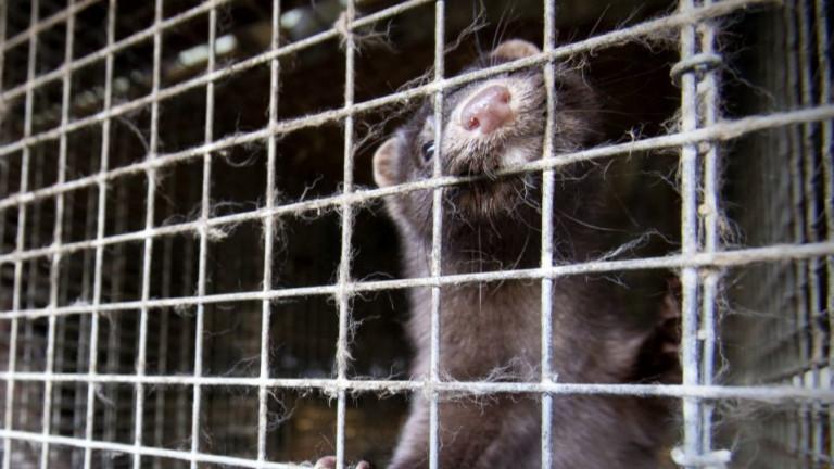 Разследват незаконно изхвърлени трупове на животни край Боров дол