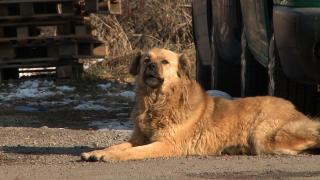 """Все повече изоставени кучета намират новите си стопани, отчитат от """"Екоравновесие"""""""