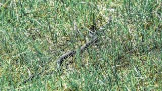 Змия стресна деца в училищен двор в Смолян