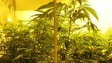 Обвиниха 38-годишен за отглеждане и съхранение на наркотици в Шабла