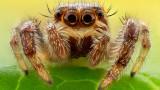 Кои са опасните паяци в България