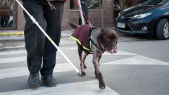 Родни лекари извършиха уникална за света операция на сърце на куче