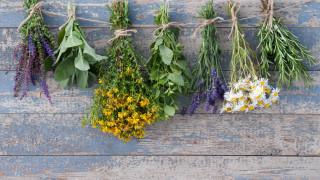 МОСВ напомня, че билките имат лимит и трябва да се ползват разумно