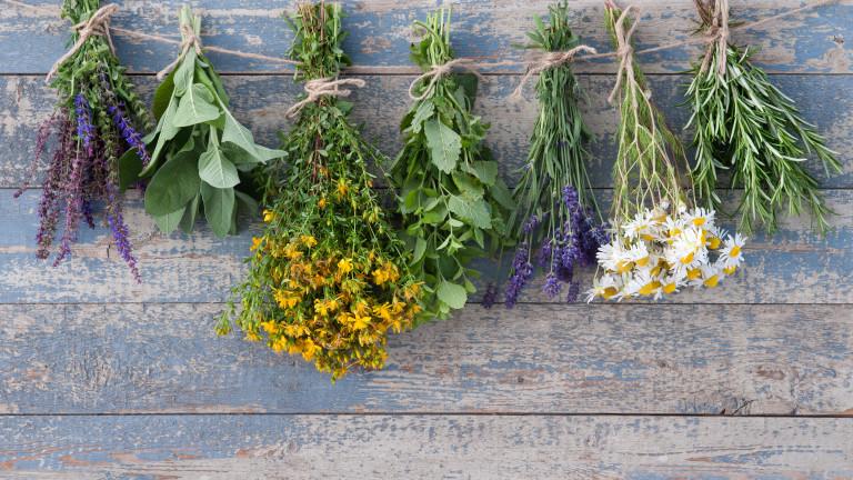 В България се събират около 200 вида лечебни растения. Те