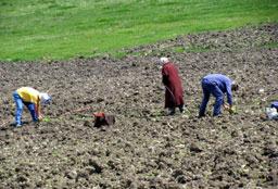 Отпускат 1 .4 млн. лв. за земеделски проекти