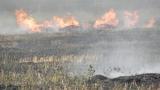 Пиян 30-годишен безработен запалил гората край село Ягодина