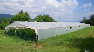 Две оранжерии с над 800 кг канабис откриха в Огражден