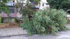 БСП – София иска отстраняване на опасните дървета в столицата