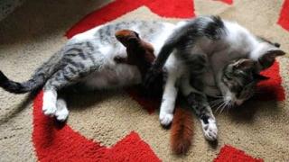 Солидарност по животински