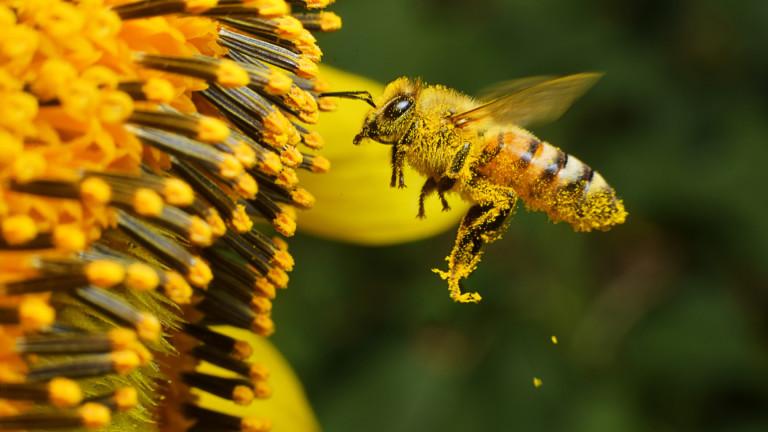 През 2018 година България изнася около 10 000 тона пчелен