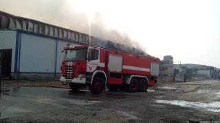 Развалящото се месо в изгорелия цех във Войводиново притеснява местните