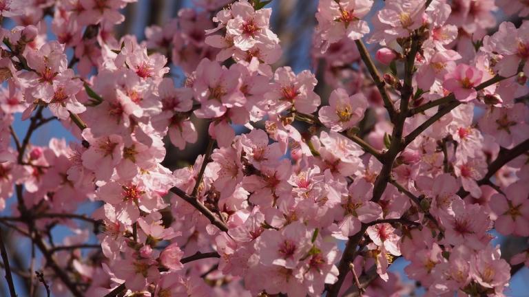 Времето в неделния ден ще бъде предимно слънчево, с пролетни