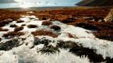 Могат ли да се завърнат епидемиите (заради топенето на вечните ледове)