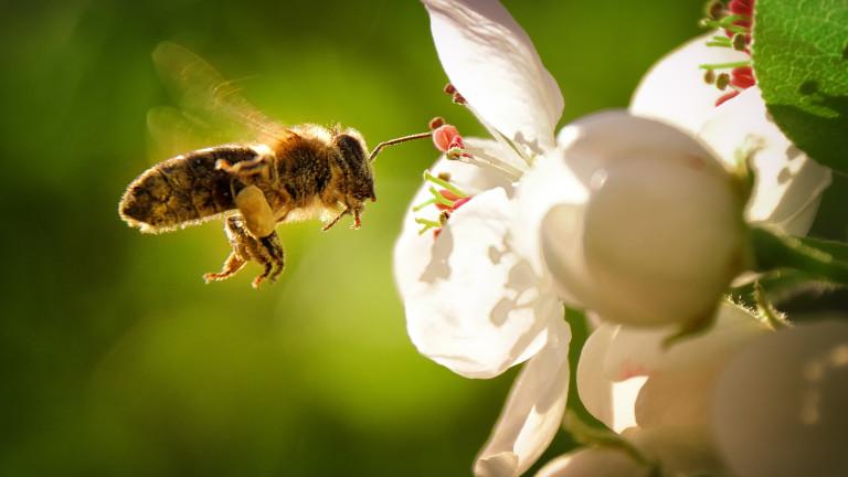 Всяка година броят на видовете растения и животни, които са
