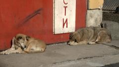 Разследват смъртта на 19 кучета в Перник
