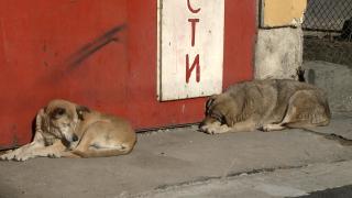 Разследват смъртта на бездомни кучета в Пернишко
