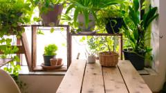 Тайният живот на растенията
