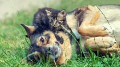 Как да социализираме кучето си