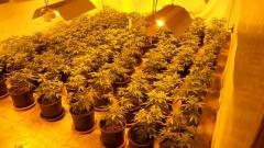 Разбиха две наркооранжерии в Търновско