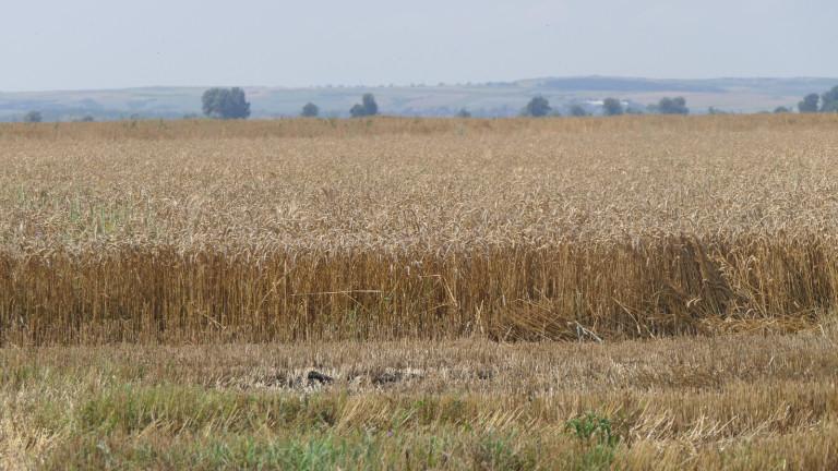 Биопроизводители предлагат на земеделския министър Десислава Танева да организира изработването
